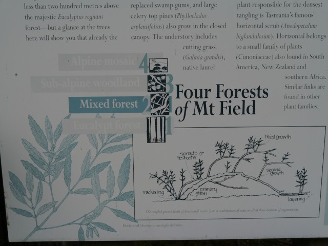 The main theme of this road takes you through four forest types is given prominence and treated graphically as well as verbally. If people get nothing else they are likley to remember 'Four Forests of Mount Field' And that may be enough.