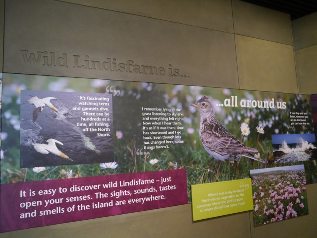 It was about encouraging people to see and experience more of the wild side of Lindisfarne.